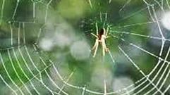 Cropped_thumb_biodiversite_araignees