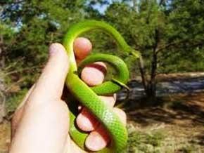 Thumb_biodiversite_couleuvres