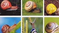 Cropped_thumb_biodiversite_escargots