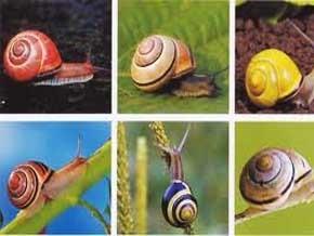 Thumb_biodiversite_escargots