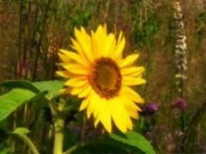 Thumb_entretien_avec_la_mati_re_fleurs