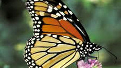 Cropped_thumb_animal_treasure_butterfly