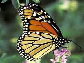 Thumb_animal_treasure_butterfly