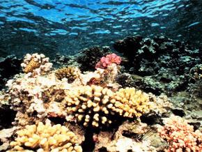 Thumb_animal_treasure_coral