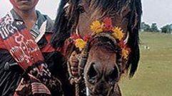 Cropped_thumb_721_cavaliers_du_mythe_sumbanese