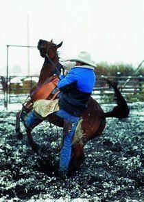 Thumb_719_cavaliers_du_mythe_cowboys