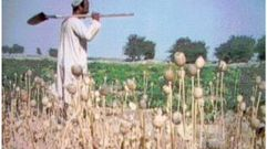 Cropped_thumb_688_afghanistan