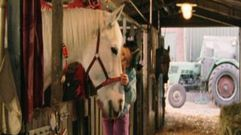 Cropped_thumb_402_cheval_de_saint_nicolas