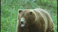Cropped_thumb_531_yeux_de_la_decouverte_ours