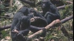 Cropped_thumb_509_primates