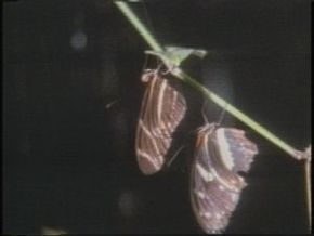 Thumb_507_papillons