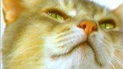 Cropped_thumb_501_felins