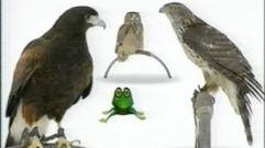 Cropped_thumb_1468_quelles_droles_de_betes_ii_oiseaux_de_proie