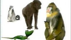 Cropped_thumb_1463_quelles_droles_de_betes_ii_primates