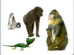 Thumb_1463_quelles_droles_de_betes_ii_primates