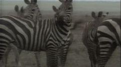 Cropped_thumb_1455_quelles_droles_de_betes_i_animaux_deguises