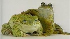 Cropped_thumb_1353_yeux_de_la_decouverte_amphibies
