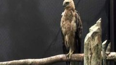 Cropped_thumb_840_in_search_of_the_javanese_eagle