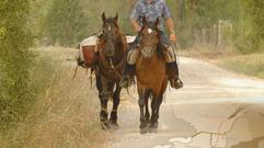 Cropped_thumb_legende_du_cheval_canadien