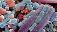 Cropped_thumb_monde_bacteries