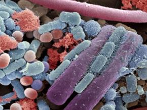 Le monde bactérie, ces microbes qui nous gouvernent