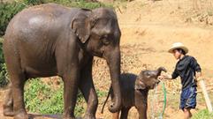 Cropped_thumb_geolino_thailande_elephant_en_exil