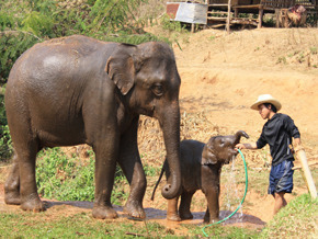 Thumb_geolino_thailande_elephant_en_exil