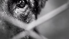 Cropped_thumb_faut_en_parler_animaux_de_la_honte