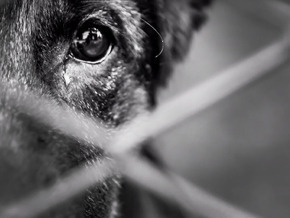 Thumb_faut_en_parler_animaux_de_la_honte