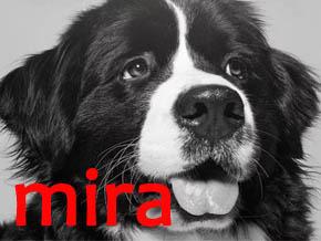 Thumb_mira