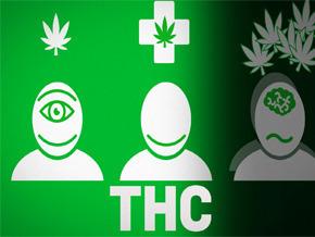 Cannabis un marché mondial