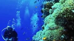 Cropped_thumb_oceans_nouvel_eldorado