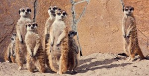 Meerkat: What You Need To Know About the New Live Streaming App
