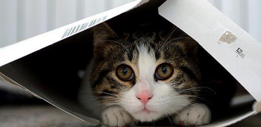 Cats-Box