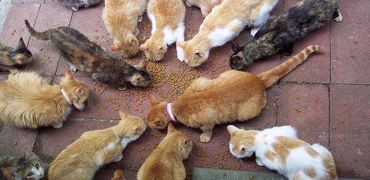 Cats-Community