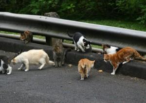 Community Management: Quit Herding Cats