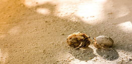 conversation-crabs