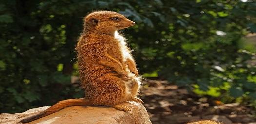 watch-meerkat-media