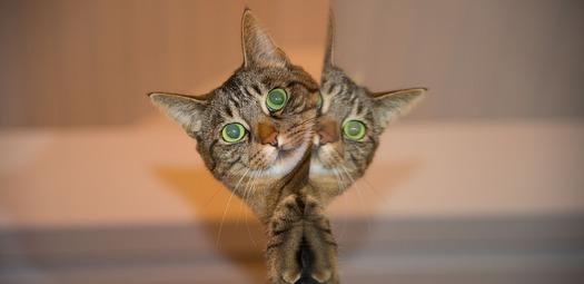 Cat-PR
