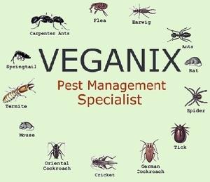 Image 8   Veganix Exterminators