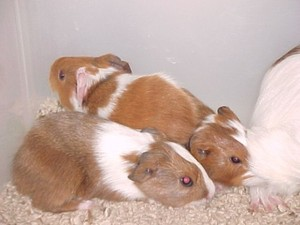 Image 2 | Banfield Pet Hospital