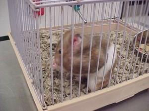 Image 3 | Banfield Pet Hospital