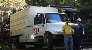 Image 3   BAM Tree Experts