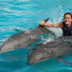 Image 4 | Oahu Swim with Dolphins Tour & Ticket