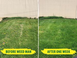 Image 6 | Weed Man