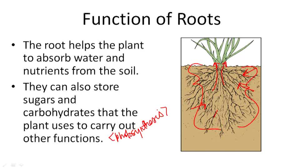 The Four Main Plant Structures - Example 1