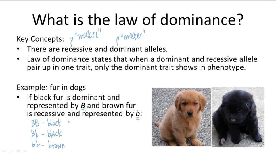 law of dominance - photo #8