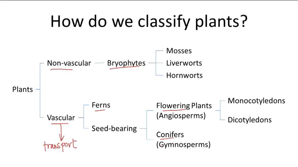 plant classification worksheet Termolak – Plant Classification Worksheet