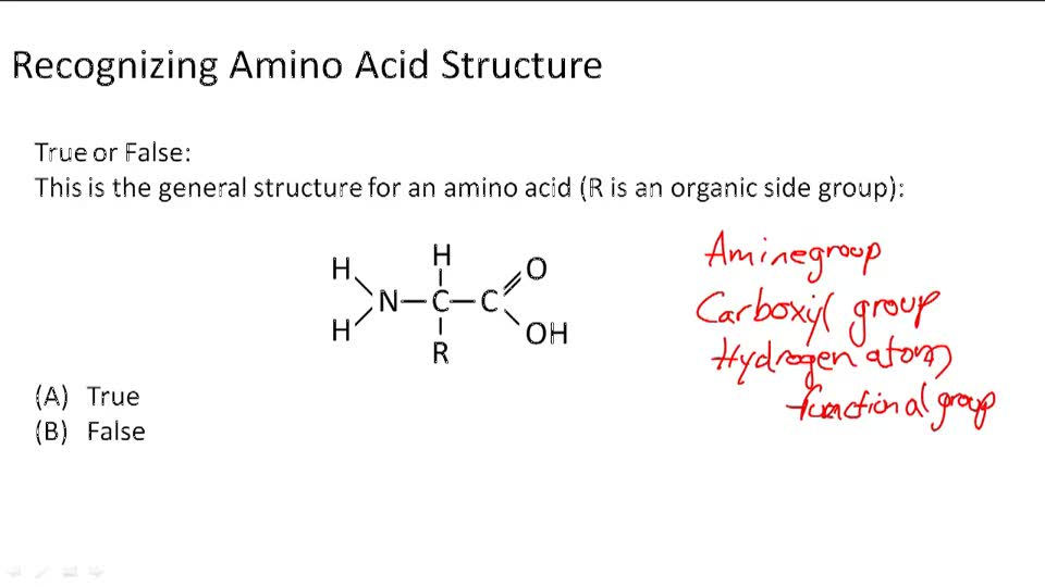 Amino Acids - Example 1