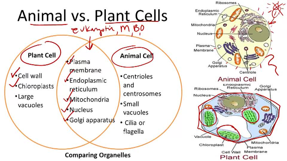 Cell Structure and Organization - Overview
